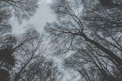 看对天空通过树 库存图片