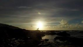 看对有落下舔与浪潮出去的太阳和波浪的海的一只孤立海鸥 股票视频