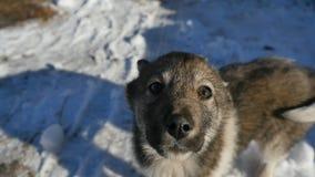 看对照相机的愉快的狗 库存照片