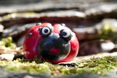 看对照相机的瓢虫惊奇 免版税库存图片