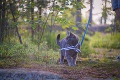 看对看见的猫 免版税库存照片