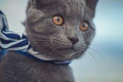 看对看见的猫 免版税库存图片