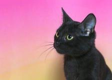 看对观察者的黑小猫画象离开 免版税库存图片