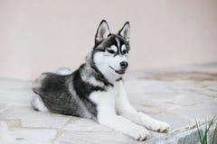 看小狗的爱斯基摩在旁边 免版税库存照片