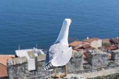 看市威尼斯,意大利的海鸥 图库摄影