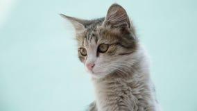看幼小灰色的猫坐和左边 图库摄影