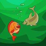 看彼此的鱼在深 库存照片