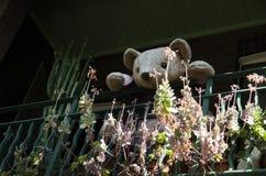 看您从阳台的玩具熊Surry Hills,悉尼 免版税库存图片