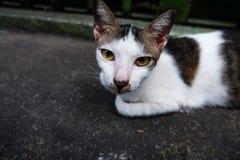 看您的一只逗人喜爱的猫 免版税库存照片