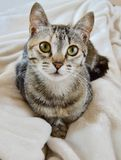 看您的可爱的小猫 免版税库存照片