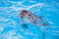 看您的微笑的海豚 免版税图库摄影