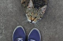 看所有者的恼怒的猫 库存图片