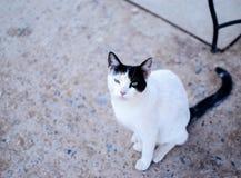 看摄影师的孤立猫 库存照片