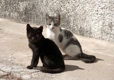 看摄影师的离群小猫,几乎,好象要求f 库存照片