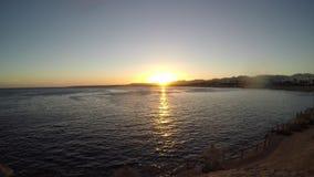 看日落的海滩的一个人 股票视频