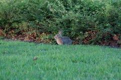 看板卡复活节草甸兔子 免版税库存图片