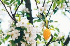 看板卡复活节 在开花的苹果树的复活节彩蛋 免版税库存图片