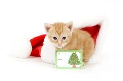 看板卡帽子小猫圣诞老人 免版税库存照片