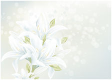 看板卡花卉百合 库存图片