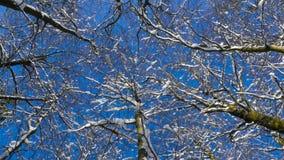 看树梢在冬天 股票视频