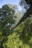 看横渡密林的一个木人行桥 免版税库存照片