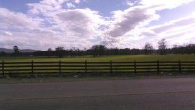 看横跨牧场地 免版税库存图片