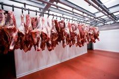 看法一半母牛大块新鲜连续垂悬和安排在一个大冰箱在冰箱肉工厂 库存照片