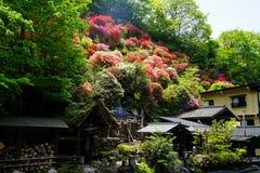 看法五颜六色开花开花在小山,绿色树,并且地方房子在晴天在Kurokawa onsen镇 免版税库存照片