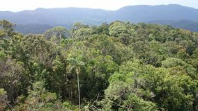看法从上面- sinharaja雨林 库存图片