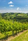 看法从葡萄园到南styrian酒路线小山  免版税图库摄影