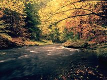 看法到秋天有被弄脏的波浪,新鲜的绿色生苔石头和冰砾的山河里在河岸 免版税库存图片