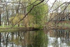 看法向一个池塘通过树 免版税库存图片