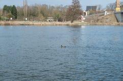 看法向一条空的河在春天 库存图片