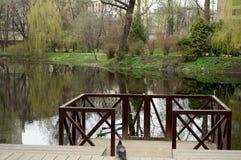 看法向池塘 图库摄影