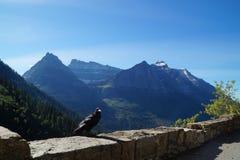 看法在冰川国家公园 库存图片