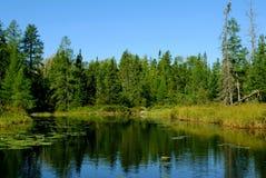 看法在森林 库存照片