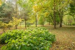 看法在没有人的绿色公园 免版税库存图片