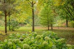看法在没有人的绿色公园 库存图片