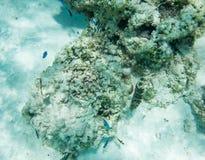 看法在珊瑚礁生活 免版税库存图片