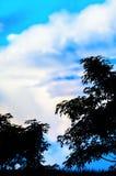树剪影在蓝天的 免版税图库摄影
