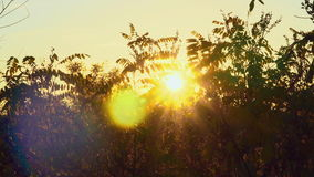 看法日落通过灌木 在干草原的秋天 影视素材