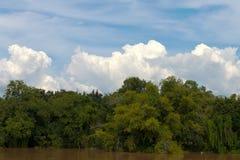 看法沿着河的林木 库存图片