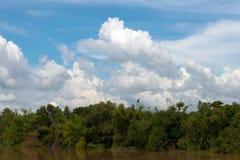 看法沿着河的林木 免版税库存照片