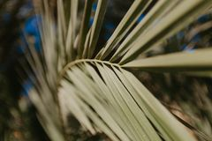看法的棕榈叶关闭 图库摄影