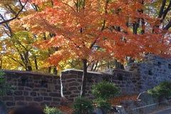 从看法的秋天颜色从汉城塔小山顶,汉城韩国-亚洲2013年11月 库存照片