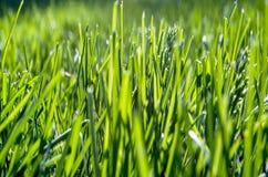 看法的绿草关闭 库存图片