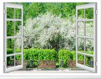 看法窗口开花的树 免版税库存图片