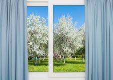 看法窗口开花的树 免版税库存照片