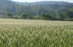 看法被播种的领域,南波希米亚 免版税库存照片