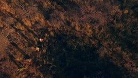 看法走通过非洲的大草原的从上面人 股票录像